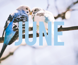 beautiful, birds, and blue image