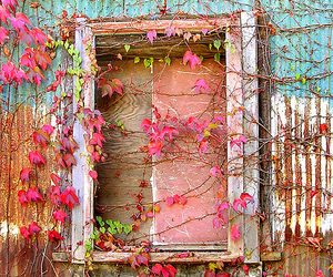 window, flowers, and pink image