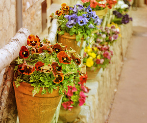 colorful, flowers, and pots image