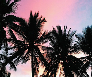 palm trees, summer, and beautiful image