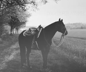 equestrian, horse, and nature image