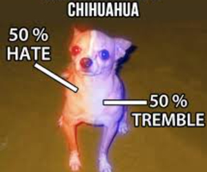 chihuahua, funny, and anatomy image