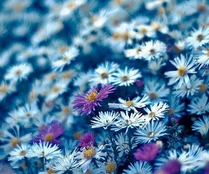 flowers, blue, and photography image