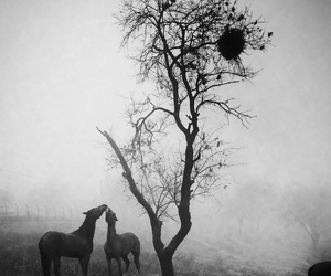 b&w, black and white, and horse image