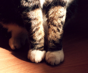 cat, paws, and djur image