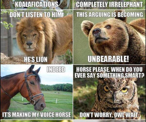 funny, animal, and lol image
