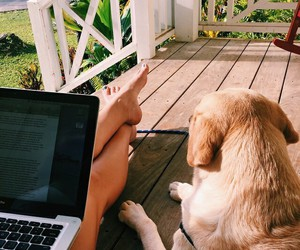 dog, animal, and summer image