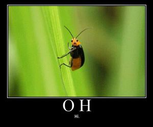 funny, hi, and bug image
