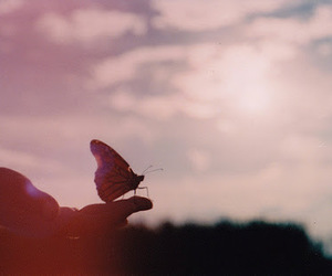 butterfly, world, and cute image