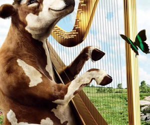 cow, crazy, and happy image