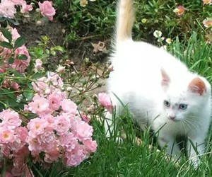 cat, flowers, and bambi image