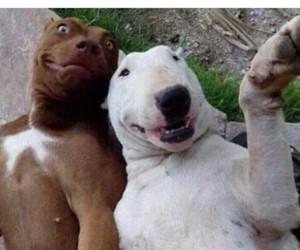 dog, selfie, and itsgaysee image