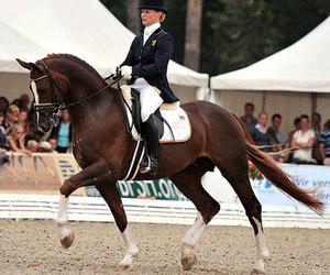 dressage, horse, and swedish warmblood image