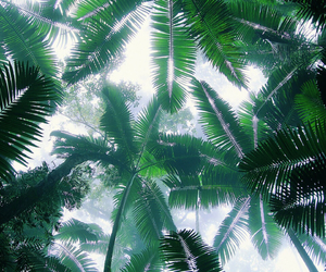green, summer, and palms image