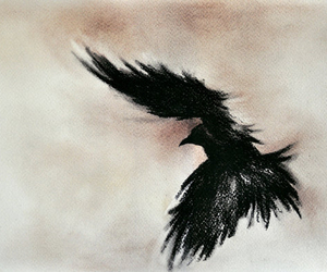 black, cool, and crow image