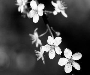 black and white and flower image
