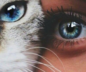 cat, eyes, and blue image