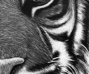 animal, tiger, and love image