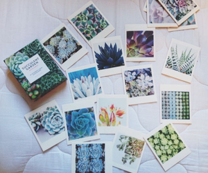 plants, polaroid, and cactus image