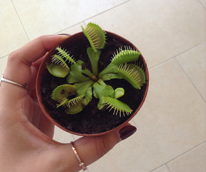 carnivorous plant, life, and rings image