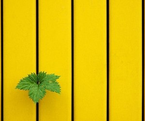 yellow and green image