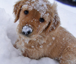 awwwww, sweet, and winter image
