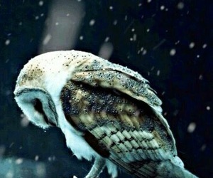 animal, owl, and snow image