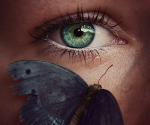 butterfly, eye, and beautiful image