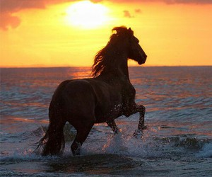 horse, sunset, and sea image