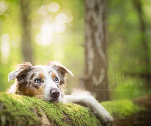 border collie, cute dog, and dog image
