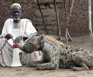 africa, hyena, and man image