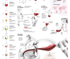 graphic, wine, and taste image