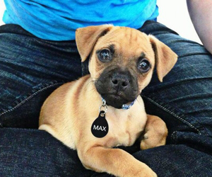 dog, animal, and paws image