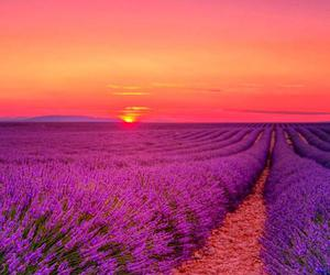 beautiful, flowers, and horizon image