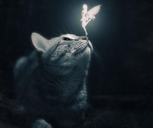 cat, fairy, and fantasy image
