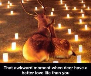 deer, love, and funny image