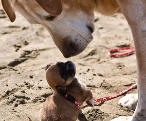 dog, puppie, and sand image