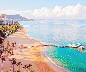 beach, trees, and florida image