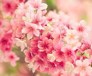 nature, pink, and world image