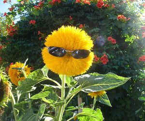 flowers, yellow, and funny image