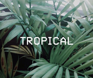 tropical, green, and grunge image