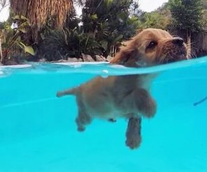 pool, puppy, and sweet image