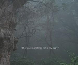 dark, forest, and grunge image