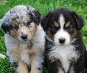 puppy, cute animals, and dogs image