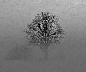 black and white, Darkness, and tree image