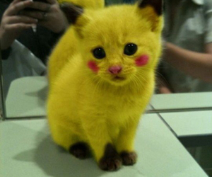 cat, pikachu, and pokemon image