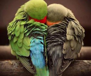 heart-shaped, loving, and feathers image