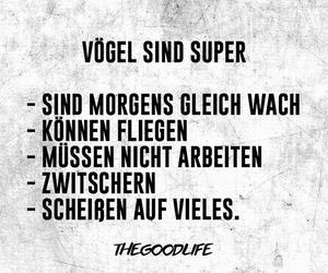 deutsch, fit, and vögel image