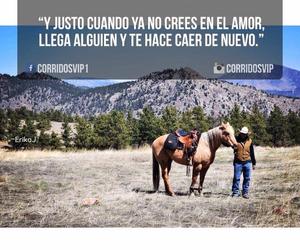 amor, caballos, and decepcion image