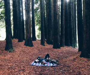 forest, nature, and picnic image